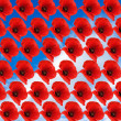 Background from poppies - Stock Photo
