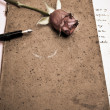 Roses and a fountain pen — Stock Photo