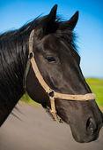 Ein pferdekopf — Stockfoto
