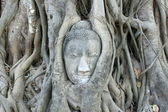 Buddha Head in Ayutthaya — 图库照片