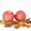 Apples and autumn leaves — Stock Photo