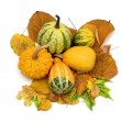 Decorative pumpkins — Stock Photo #4017191