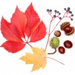 Autumn elements - Stock Photo