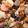 Seashell background — Stock Photo