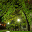 Park in the night - Stock Photo