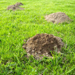 Stock Photo: Molehill