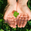 Four leaf clover — Foto Stock #4018357