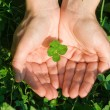 Four leaf clover — Stock Photo #4018357