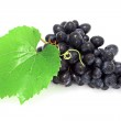 Blue grape cluster — Stock Photo #4018702