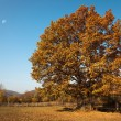 Stock Photo: Autumn scenic