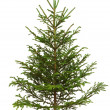 Christmas tree — Stock Photo #4018825