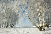 Winter landscape and trees — Stock Photo