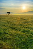 Morning field — Stock Photo