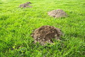 Molehill — Stock Photo