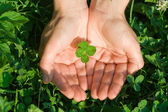 Four leaf clover — Stock fotografie