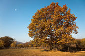 Autumn scenic — Stockfoto