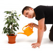 Stock Photo: Young man watering flower
