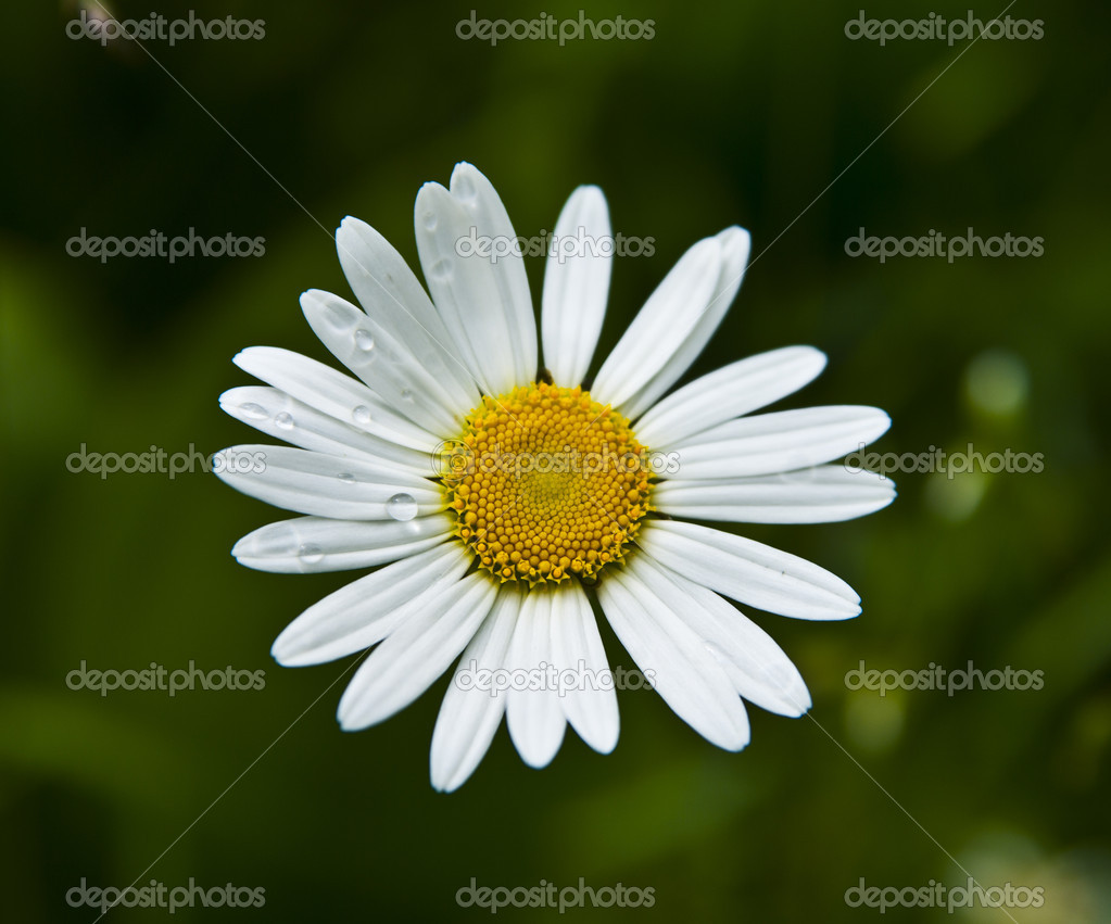 Fresh spring flowers on the  meadow. — Stock Photo #3956503