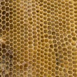 Honeycombs — Stockfoto #3963226