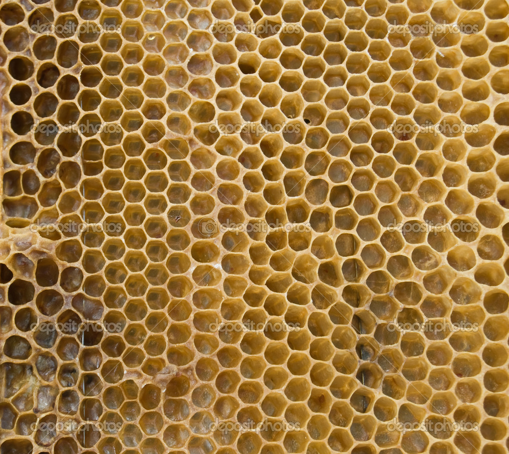 Bee honeycombs are taken off a large plan — Stock Photo #3963226