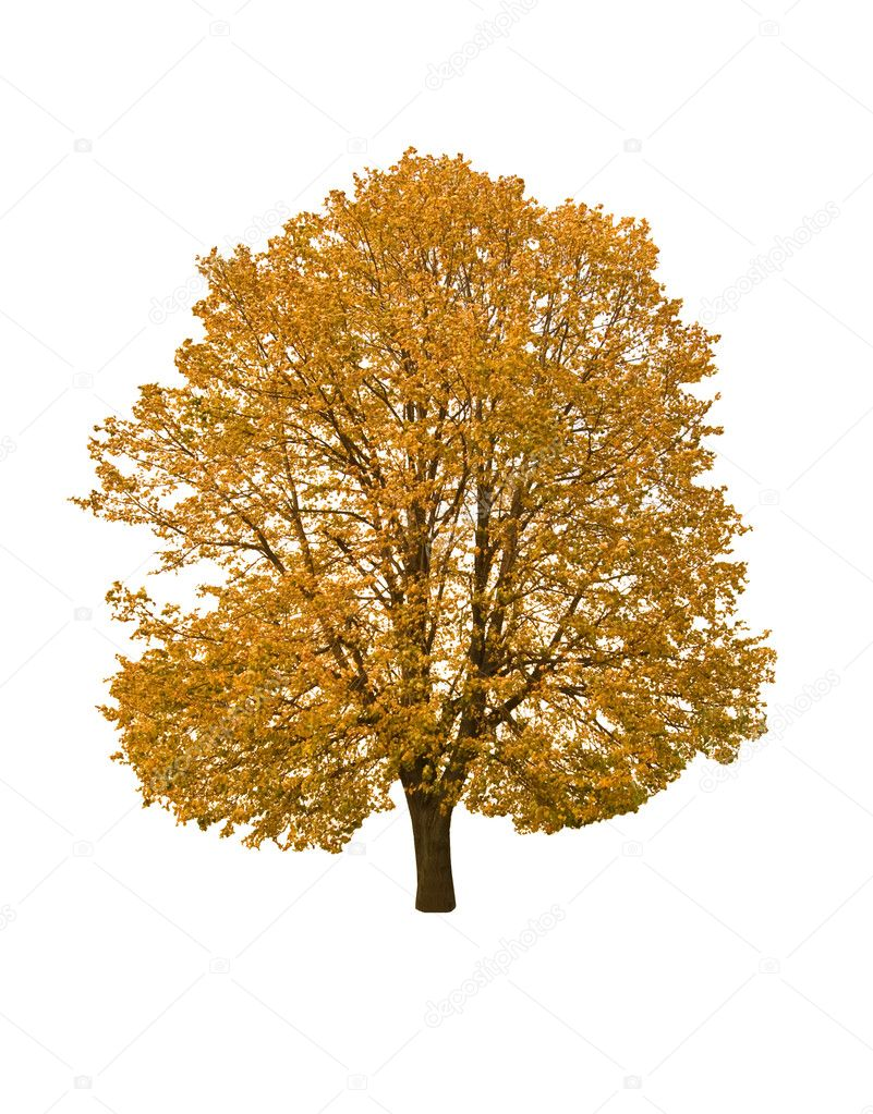 ... Fall Tree Without Leaves , Fall Trees Photography , Fall Tree Clip Art