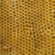 Photo: Honeycombs