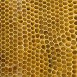 Foto de Stock  : Honeycombs