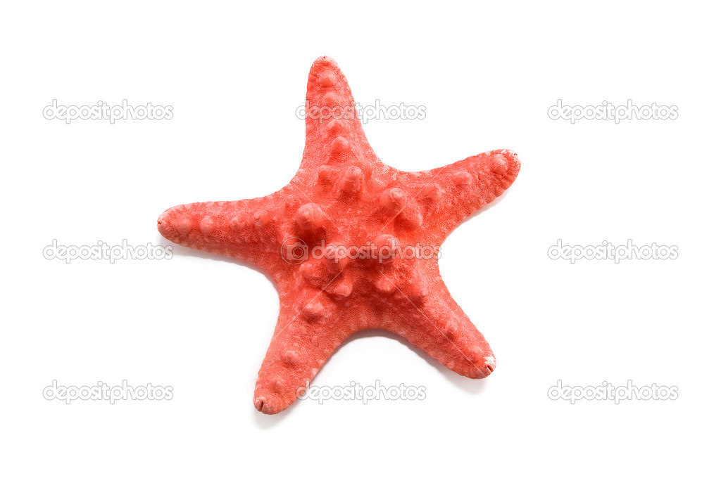 Starfish on a white background — Stock Photo #4179286