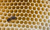Pszczoła wypełnia — Zdjęcie stockowe