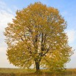 Autumn tree — Stock Photo #4971984