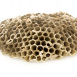 Wasp's honeycombs — Stock Photo