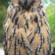Great owl — Stock Photo #4975189
