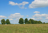 Trees are on a background sky — Stock Photo