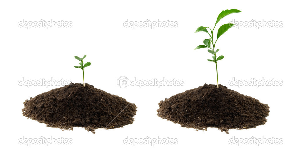 Plant green and soil stock photo petrop 4976450 for Soil and green
