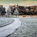 Zimą przyrody chwytania spacerem przez las w Irlandii — Zdjęcie stockowe