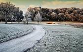 Capture de nature pittoresque hiver de promenade en forêt en irlande — Photo