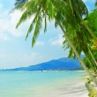 Tropical beach — Stock Photo #4024024