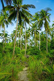 Green palmtrees in the jungle. — Stock Photo