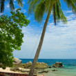 tropical beach — Stock Photo #4086870