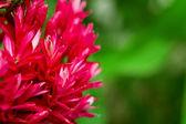 Tropikalny kwiat — Zdjęcie stockowe