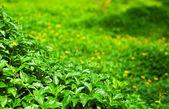 Foliage — Foto de Stock