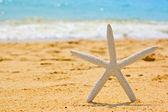 Estrela do mar — Foto Stock