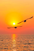 Flying birds with sunset — Stock Photo