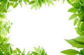 Scène de feuilles vertes — Photo