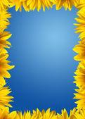 Solrosor gränsen — Stockfoto