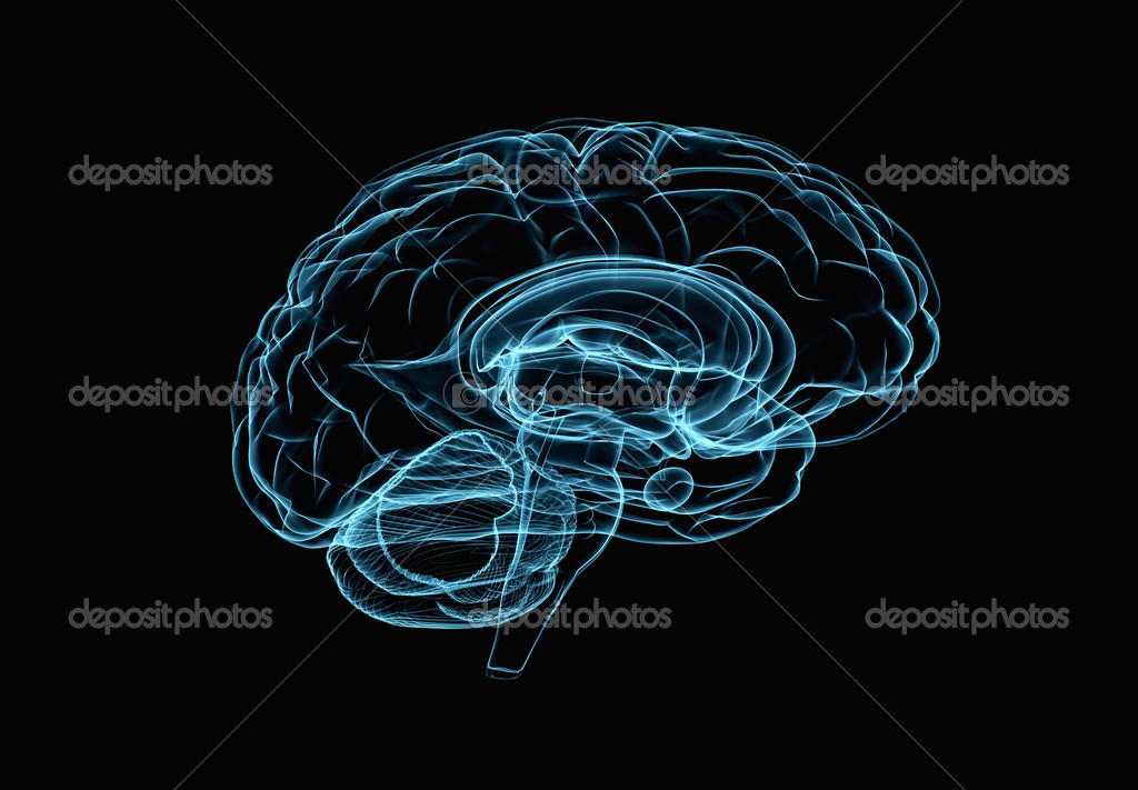 Brain model xray look isolated on black background  — Stock Photo #3989553