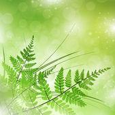 Zielona paproć — Wektor stockowy