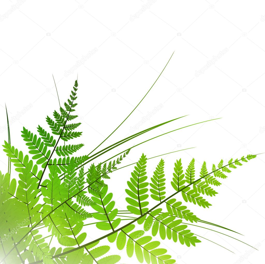 Fern with grass over white background, copyspace  Stock Vector #5264266