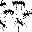 Royalty-Free Stock Vector Image: Ant