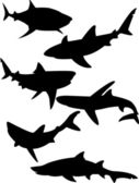 Sharks — Stock Vector